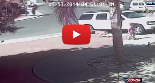 Gatto salva un bambino dall'attacco di un cane: il video che sta facendo il giro del mondo