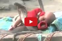 Video Shock: neonata dorme beata in mezzo a quattro cobra reali
