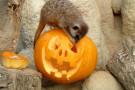 Halloween al Bioparco Zoom di Torino: gli eventi dedicati ai bambini